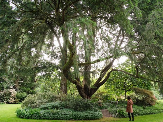 South Sound Gardens