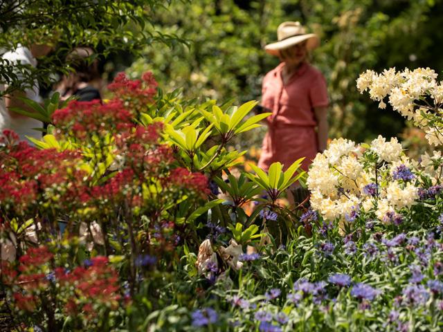 Rhododendron Species Botanical Garden Rhododendron Species Botanical Garden  Rhododendron Species Botanical Garden ...